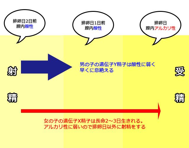 x精子の説明図